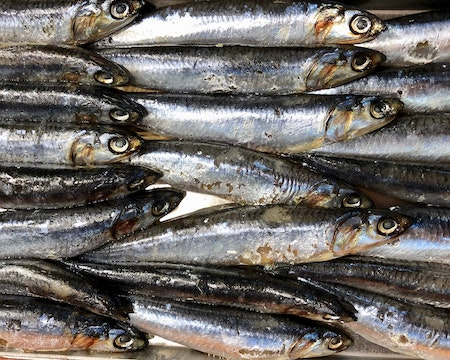 lines of fish used for their oil